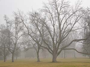 Corbin_park_trees_and_fog