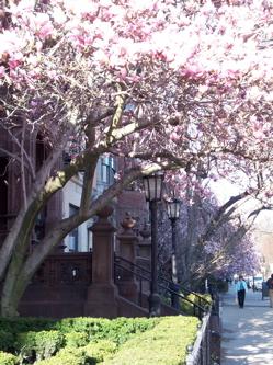 Boston_7